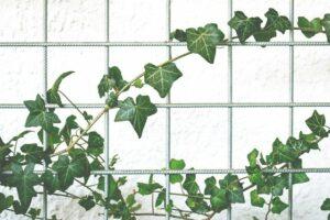 PLants Reduce Humidity